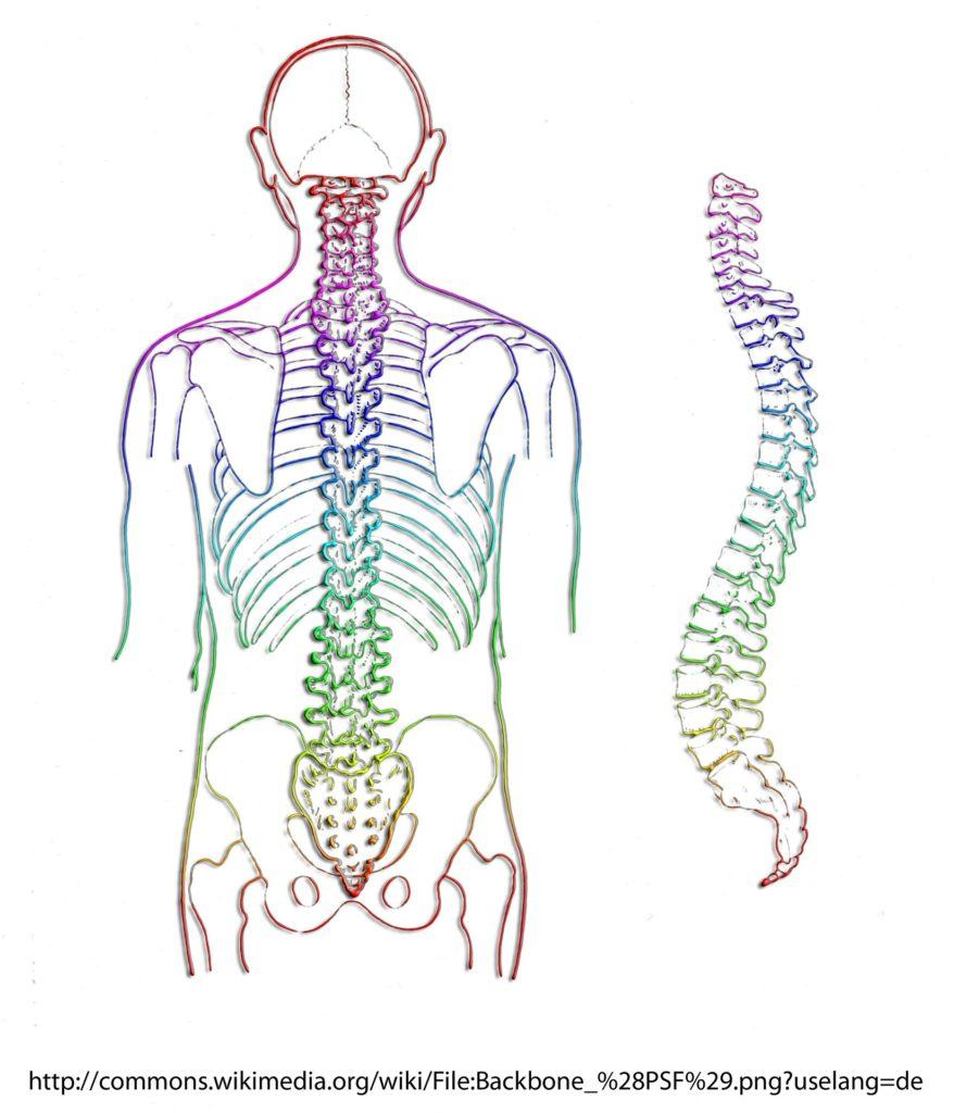 背骨 頸椎 胸椎 腰椎 骨盤